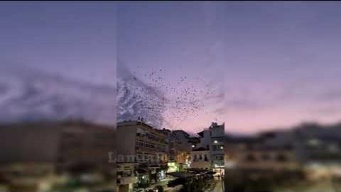 LamiaReport.gr: Ο χορός των πουλιών την ώρα που δύει ο ήλιος πάνω από την Πλατεία Πάρκου
