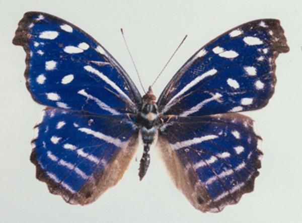 Alison Turnbull, Algunas Mariposas del Ecuador, 2012. Film still.