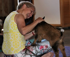 This goat loves head scratches! (Stephanie Fox/Medill)