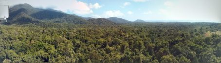 View of Daintree forrest credit Nigel Sim