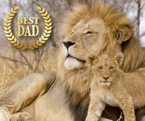Best Dads in the Animal Kingdom