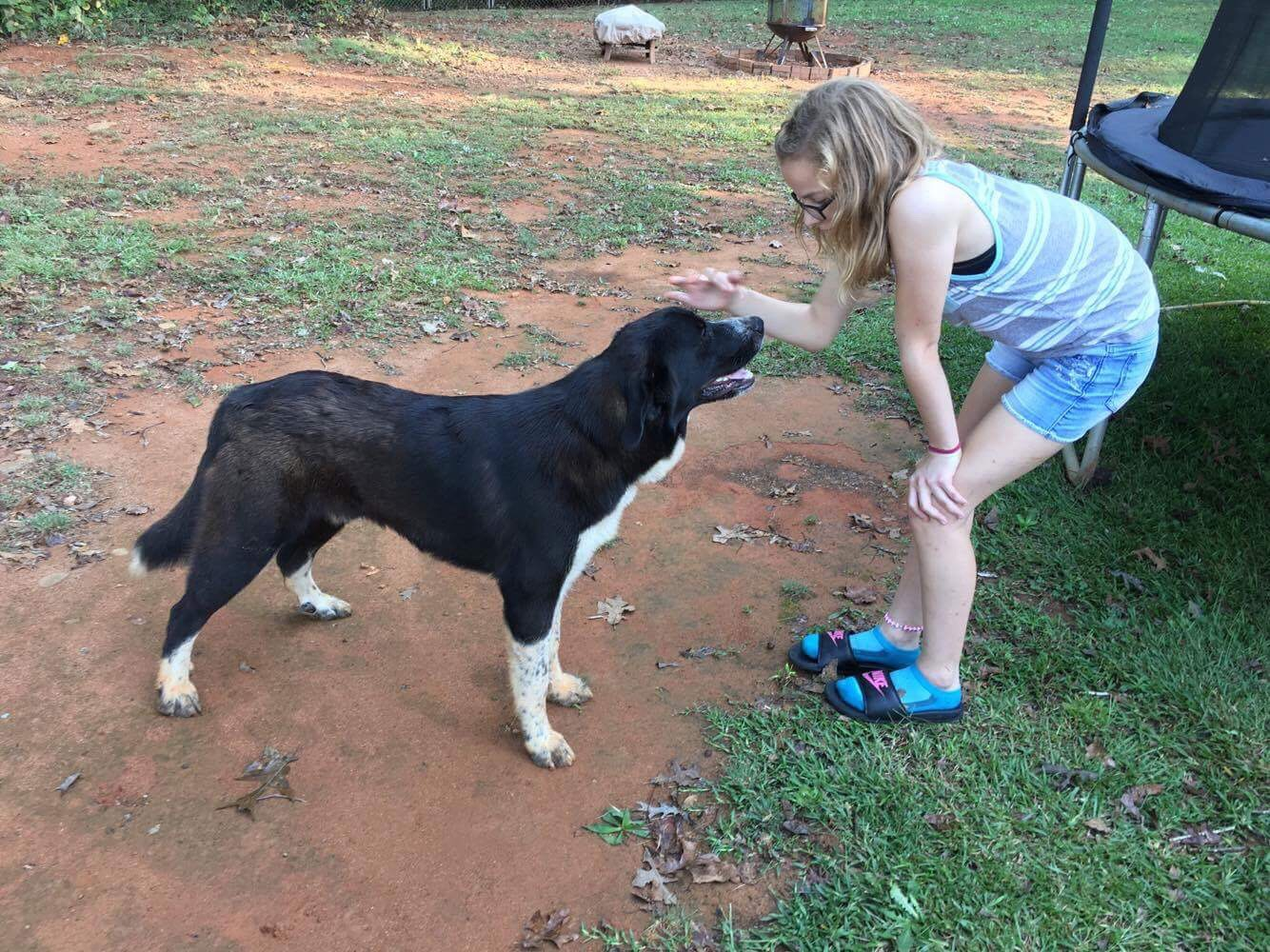Found Sweet Adult Lab mix Barrow County – Your Local News
