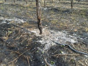 winsome and snow vineyard fire
