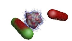 Environmentally benign nanobullet (center) attacks bacteria (left) and neutralizes it (right).