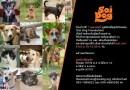 มูลนิธิเพื่อสุนัขในซอยเปิดบ้านต้อนรับคนรักหมา – แมว 7 เมษานี้ !!