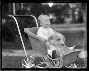 affidamento animali e figli