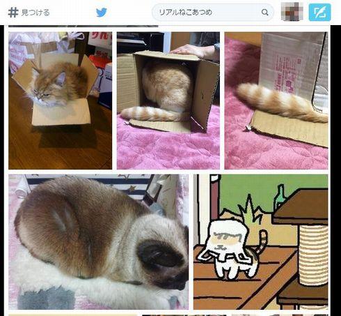 貓咪收集01