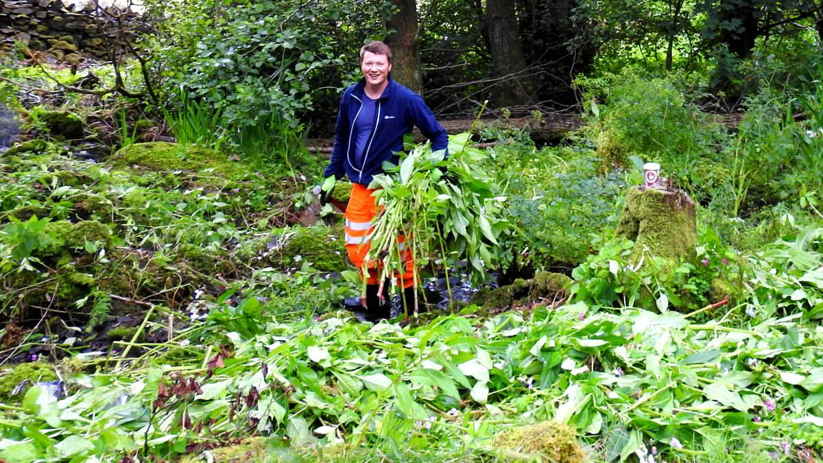 Volunteers help stop one of UK's most invasive plants from ravaging Cumbrian beauty spot