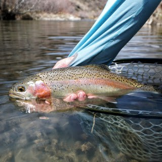 Big Rainbows on Hoppers! – Sports Tap