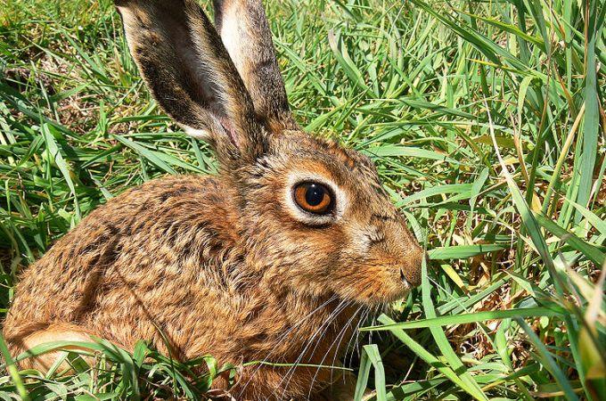 Alphabet Haiku: This Week – Letter H – Hare – Ramblings of a Writer