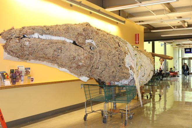 The 32-foot gray whale is made of 9,000 plastic bags braided together, as well as other debris. The whale will be on display in the lobby of the PUB through April 30 as part of Earth Week celebrations.