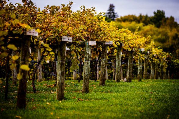 Winemaking Alums