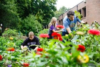 Students Elliott Magnuson (Biology) and Heidi Hill (Biology) work with Professor Kay in the University of St. Thomas Stewardship Garden.