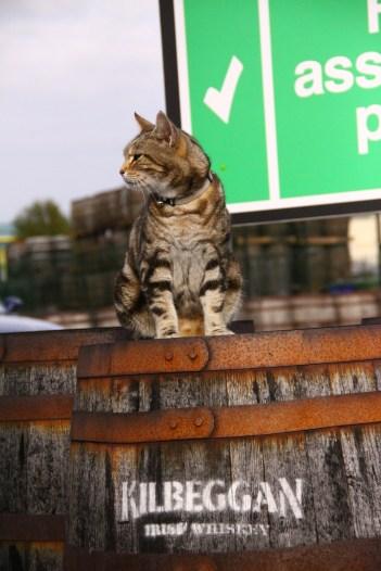 Kilbeggan Cat