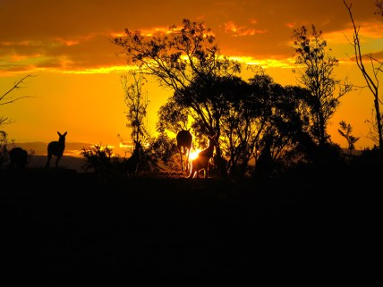 "Honorable mention, Sense of Place: Erin Engstran, Canberra, Australia. ""Canberra Sunset: This photo was taken outside our hotel in Canberra, Australia. As we were standing in the field and watching the sunset, kangaroos started emerging from the trees and filled the whole area. This photo captures my favorite moment from this study abroad trip because it was a truly unique experience that could not have happened anywhere else."""