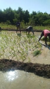Health for Haiti community garden