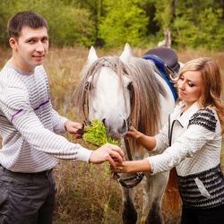Equestrian Marriage Proposal Ideas For Horse Lovers