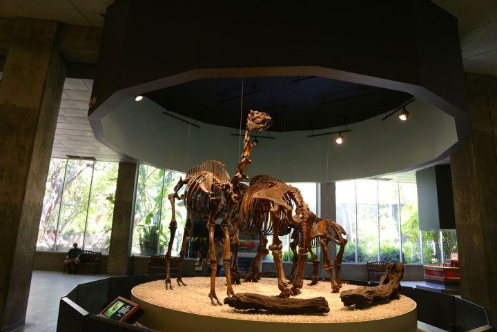 Extinct Camel