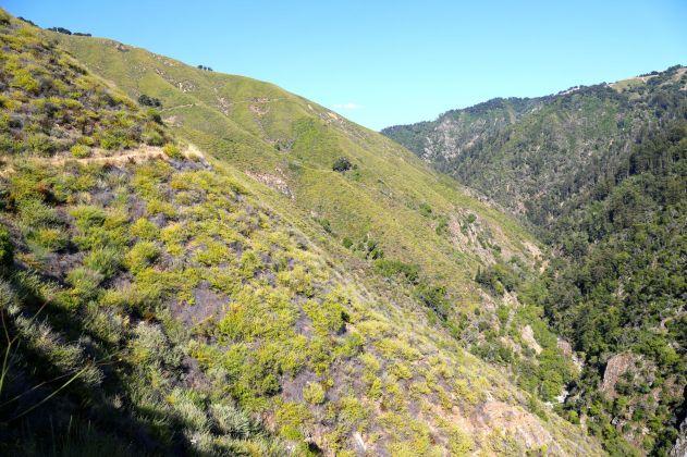 Hillsides of the Innocente Homestead.