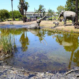 Models of Mammoths in the La Brea Tar Pits