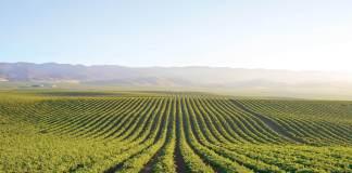 Salinas, Scheid Vineyards