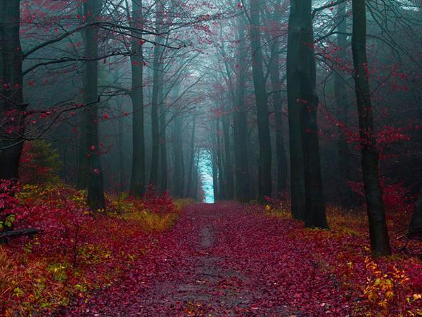 الخريف في غابة هاملن ـ ألمانيا