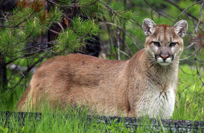 حديقة جلاسير الأمريكية: تجتمع فيها تضاريس وحيوانات العالم