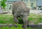 حديقة حيوان هيلابرون، ميونيخ ـ ألمانيا