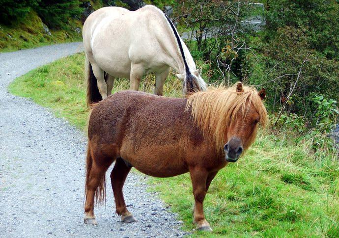 فولجيفونا السياحة النرويجية folg_08.jpg?ssl=1