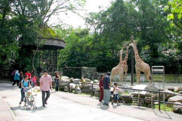 حديقة الحيوانات في كوالالمبور ماليزيا