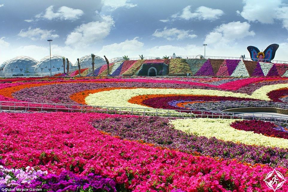 اكبر حديقة ازهار في العالم.. 45 مليون زهرة وسط الصحراء