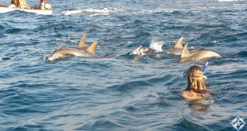 الدلافين في زنجبار