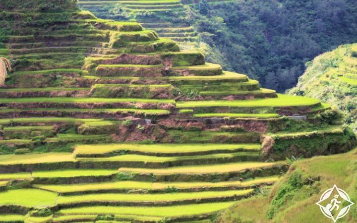 مصاطب الأرز