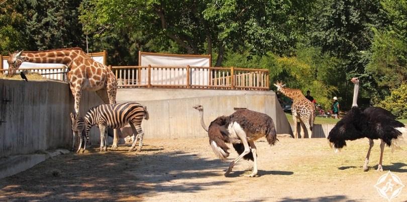 إسبانيا-مدريد-حديقة-حيوان-مدريد-السياحة-في-مدريد-للأطفال