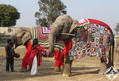 الهند-مدينة ماثورا-ملابس الفيلة-صور الأسبوع