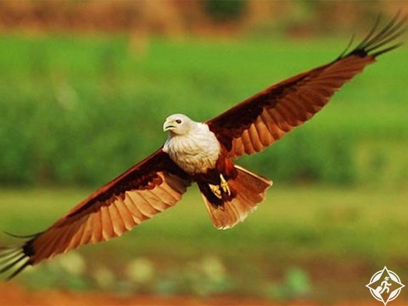 السياحة في كوتشي - محمية الطيور مانغالافانام