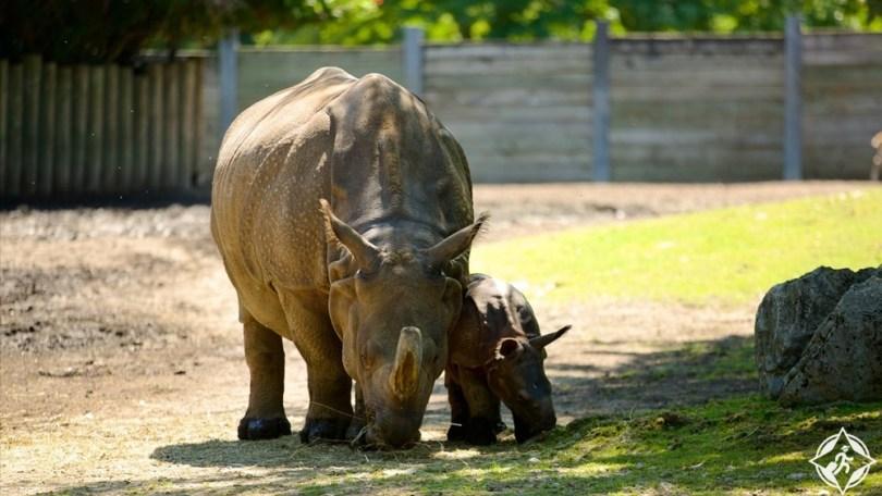 بافالو - حديقة ديلاوير وحديقة حيوان بافالو