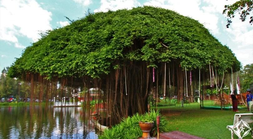 ناخون باثوم - حديقة الورود