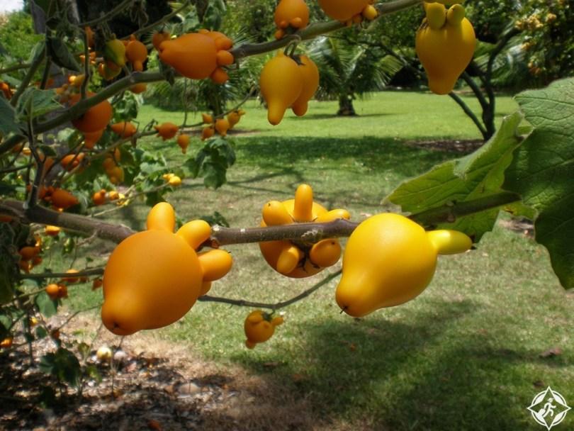 هونولولو - حديقة فوستر النباتية