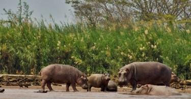 بوروندي - حديقة نهر روسيزي الوطنية