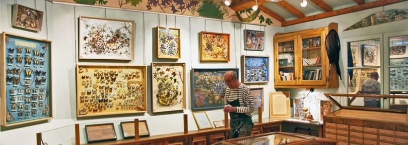 سان تروبيه - متحف الفراشات