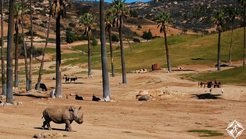 سان دييغو - حديقة حيوان سان دييغو