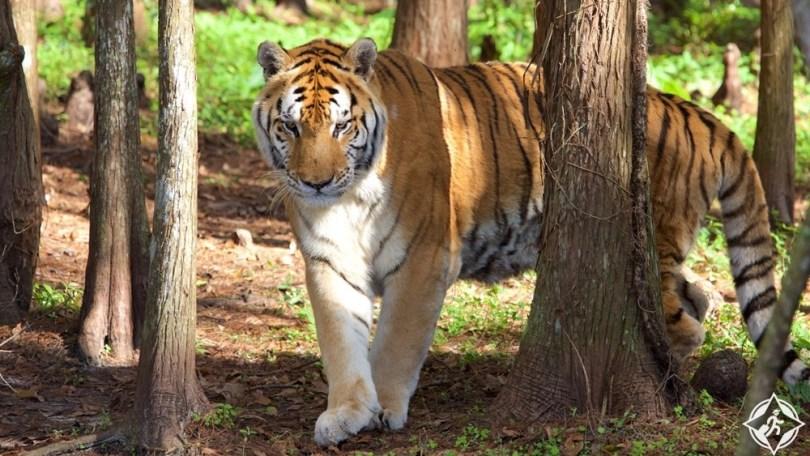 تامبا - ملاذ إنقاذ القطط الكبيرة