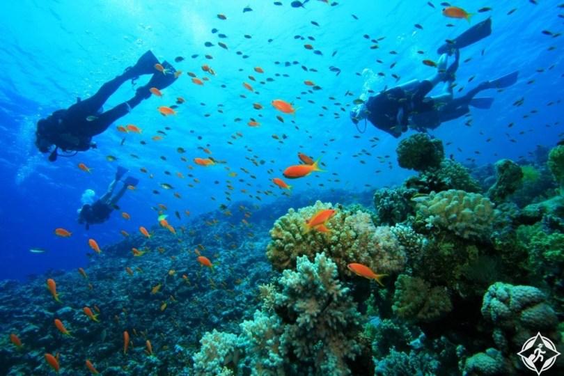 أستراليا الغربية - حديقة نينجالو ريف البحرية