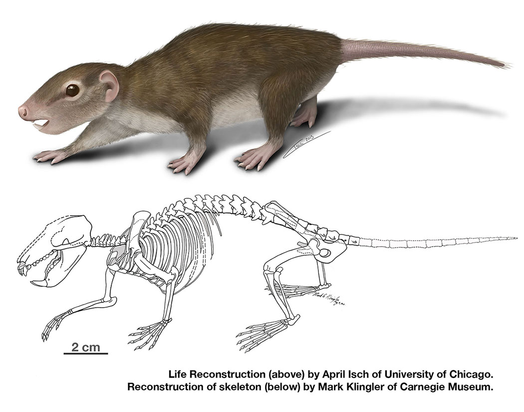 Earliest Complete Fossil From Rodent Like Ancient Mammal