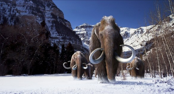 I guess it would still be interesting to see an actual alive mammoth. (Image: University of Chicago)