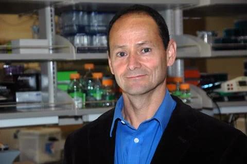 Research identifies earlier origin of neural crest cells