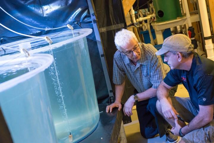 Two people kneeling next to fish tanks