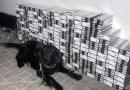 Video // Câinele Serviciului Vamal a depistat 44 000 țigarete în rezervorul autocarului de pe ruta Chișinău – Timișoara
