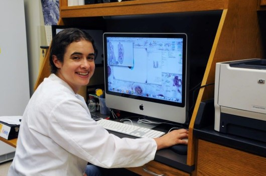 A $1.6 million grant will allow Dr. Susan Miranda to continue her research focusing on the genes regulated by estrogens in osteoblasts and osteoclasts.